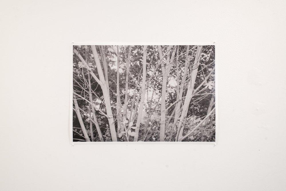 Tree_Show-14.jpg