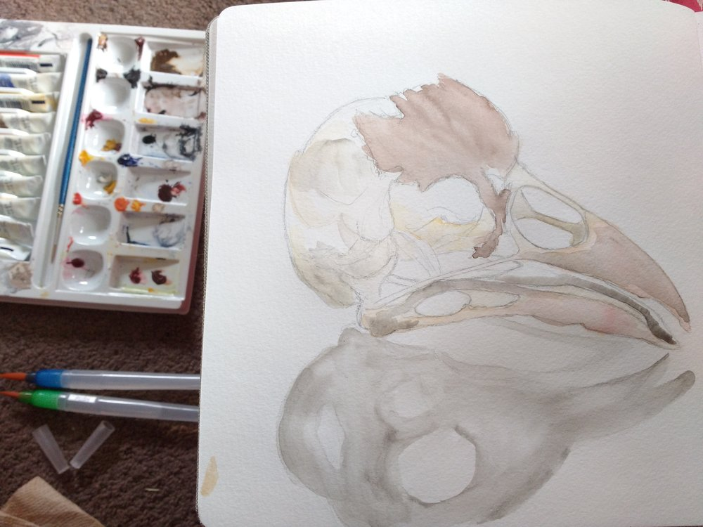 Carolyn_Byers_bird_skull_DO_NOT_USE_WITHOUT_PERMISSION.jpg