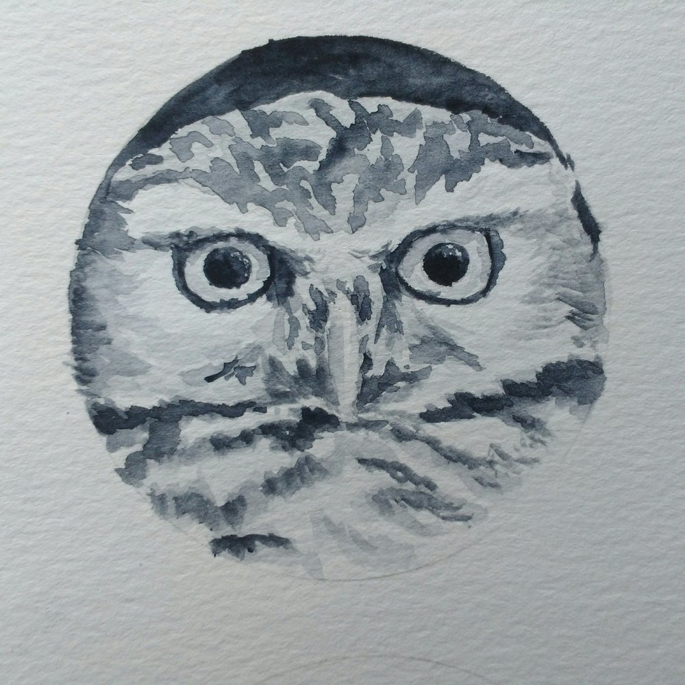 Carolyn_Byers_OwlWatercolorSketch_DO_NOT_USE_WITHOUT_PERMISSION (42).jpg