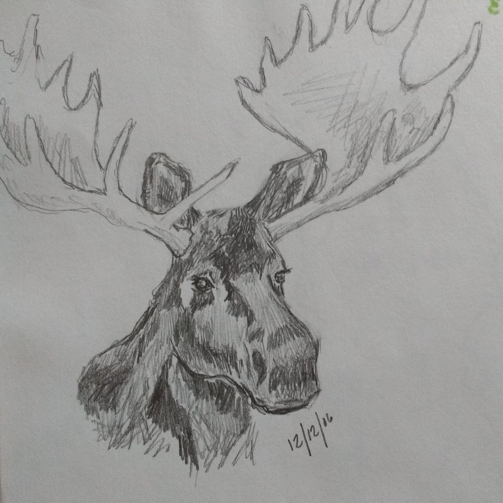 Carolyn_Byers_MooseSketch_DO_NOT_USE_WITHOUT_PERMISSION (6).jpg