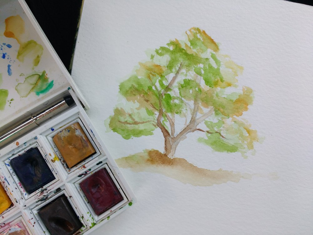 Carolyn_Byers_TreeSketch_DO_NOT_USE_WITHOUT_PERMISSION (15).jpg