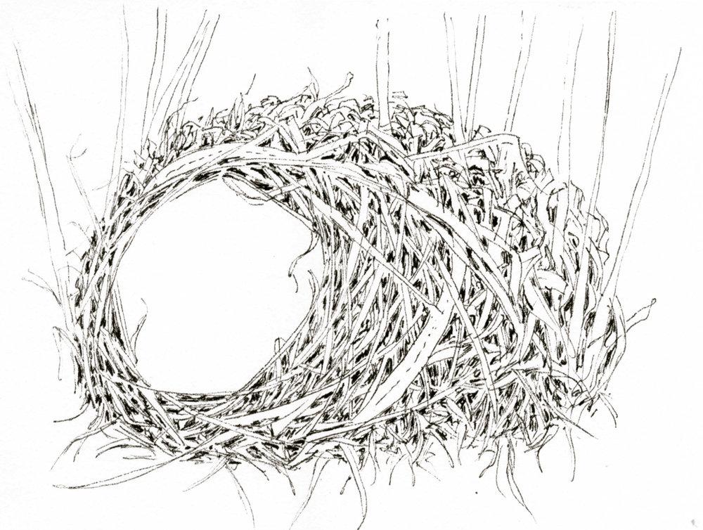 Eastern Meadowlark Nest .jpg