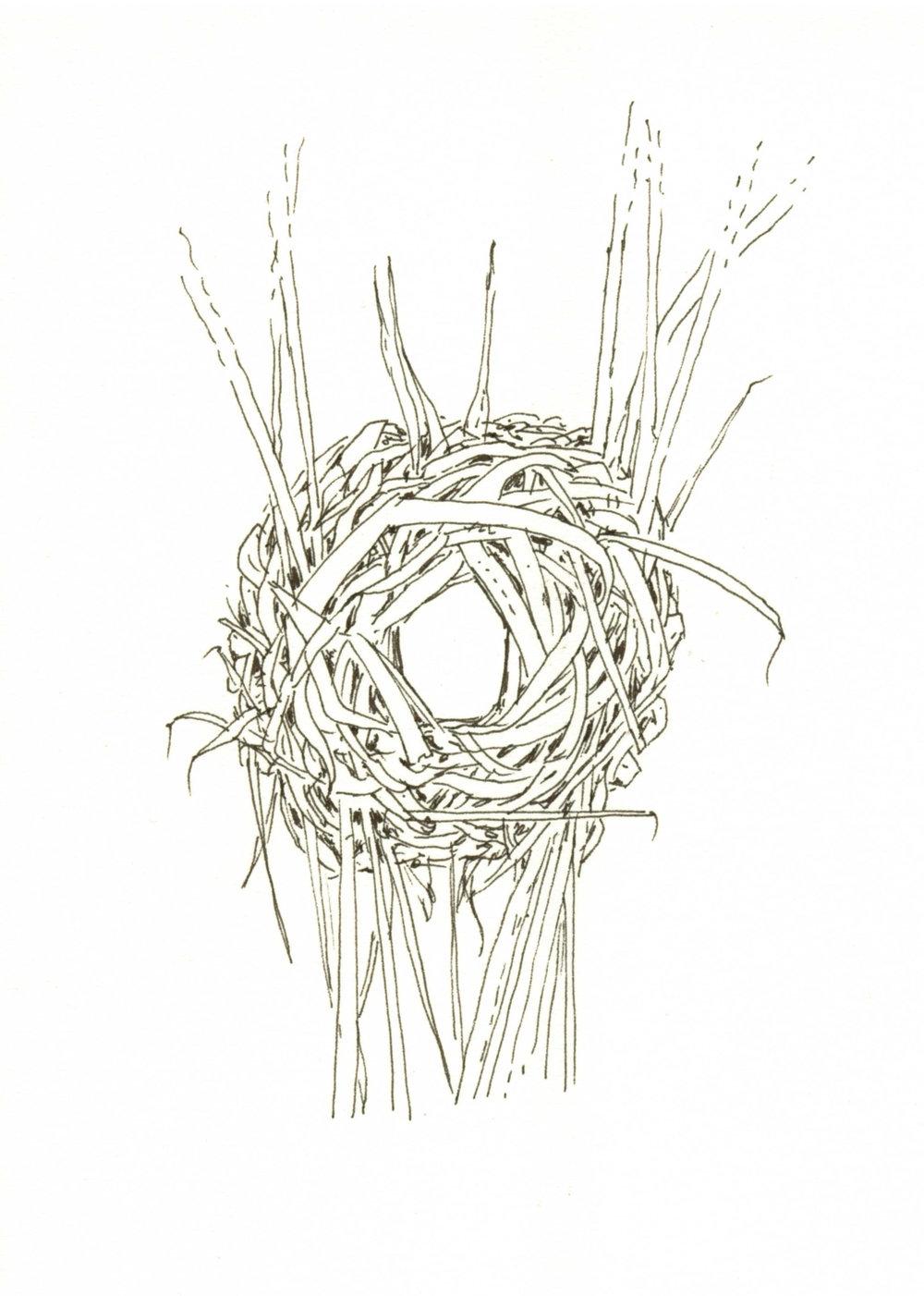 Sedge wren nest dark.jpg