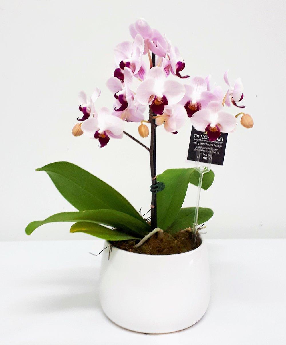 Ceramic pot Orchids.jpg