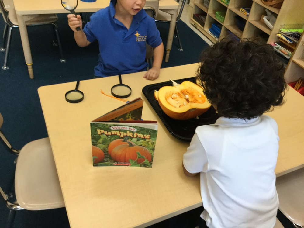 Identifying and exploring  a pumpkin