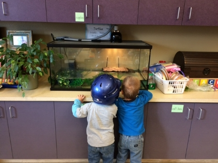 Two younger brothers watching the turtles! So adorable ........