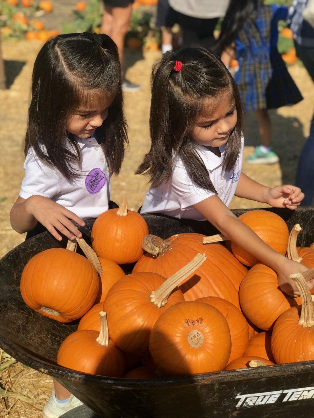 Pumpkin 5.jpg