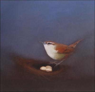 Carolina Wren and Nest.jpg