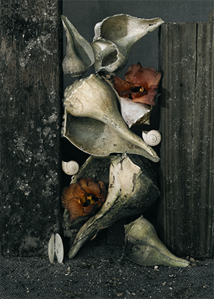 Shells with Maloe Flowers ,  sold  photograph, 39x32""