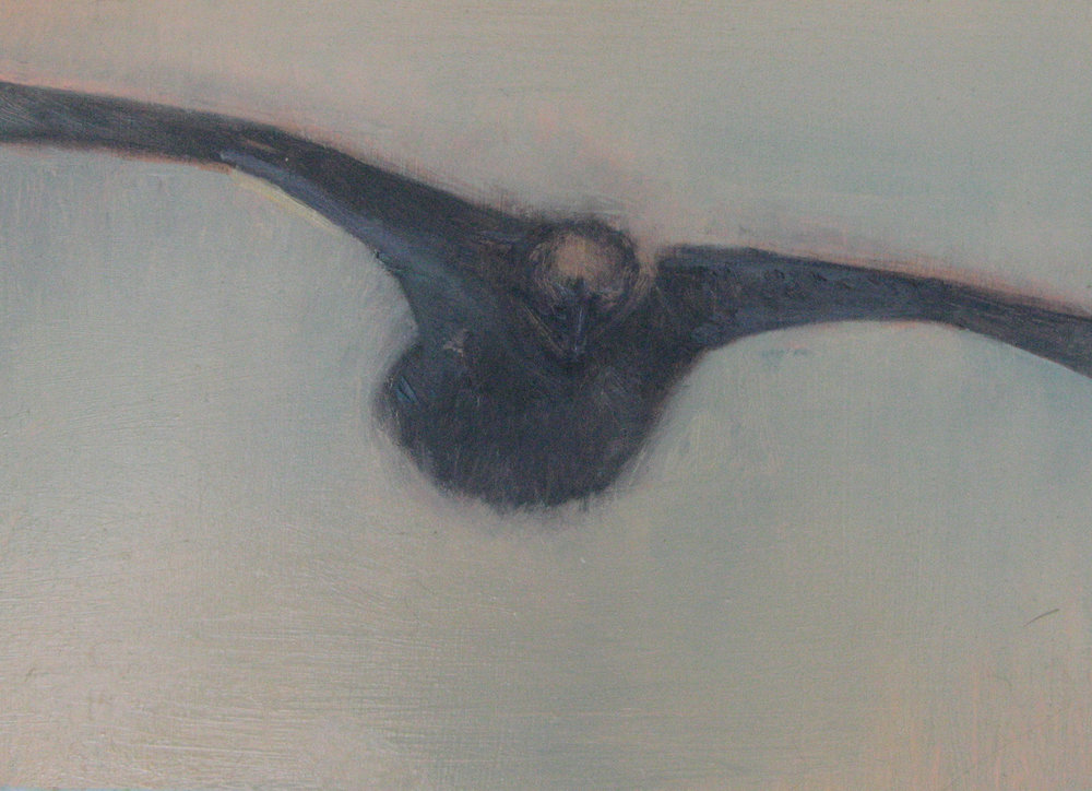 Fish Crow V
