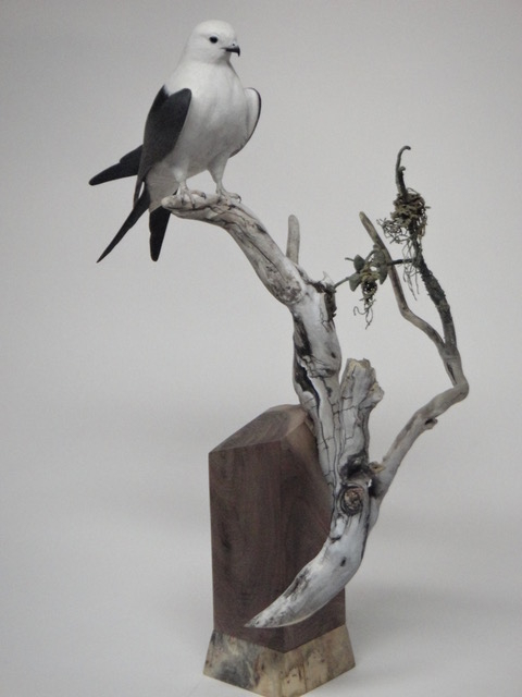 Swallow-tailed Kite, 1/3 size Carved from solid piece of basswood, hand painted, vegetation brass