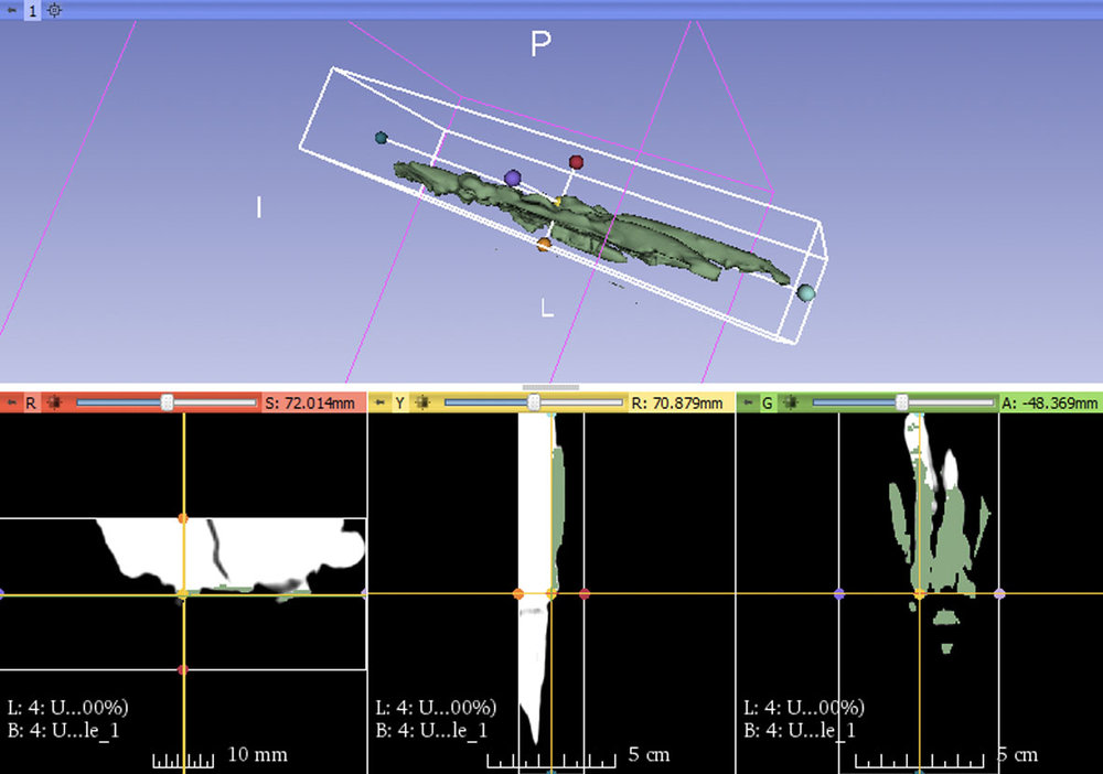 3D Processing a 65-myo turtle hand. Image Credit: Dr. J. Ann é