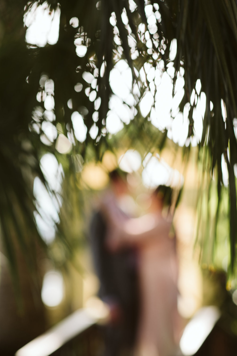 Elopement, Baltimore, Rawlings Conservatory, Greenhouse, Maryland Wedding Photographer, Indian American, Nature, Romantic, Garden, Pink Sari, Braids, Bride and Groom, Out of Focus, Candid Photo