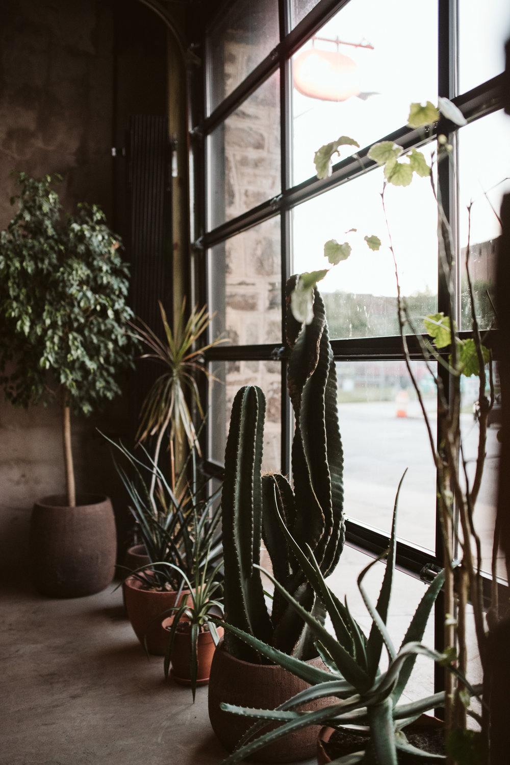 Outdoor Wedding, Casual, Simple, Baltimore, Maryland Wedding Photographer, Laid Back, September Wedding, Plants at Reception, Cactus, Perfect Lighting