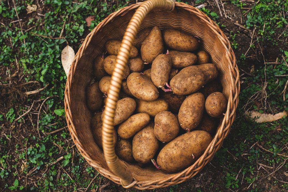 seed-potatoes.jpg