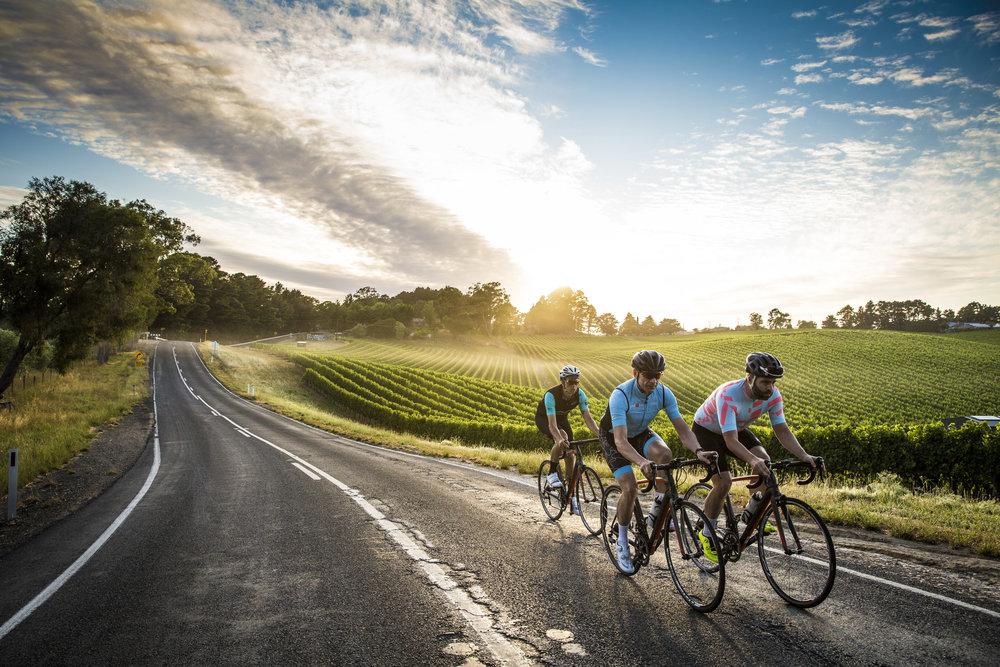 CyclistAdelaide - 1594.jpg