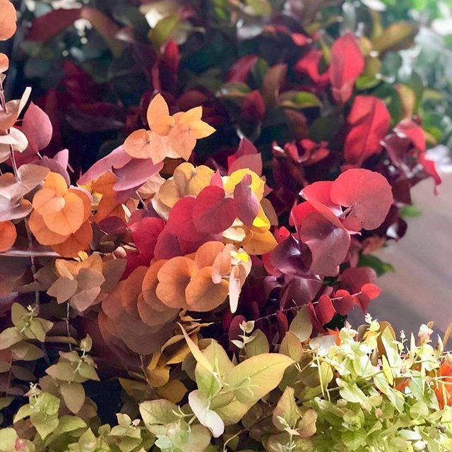 Amoureuse des nuances de cet eucalyptus automnale 💕🍂🦊 #morning #flowers #passionflower #ilovemyjob #eucalyptus #autumn #paris #florist