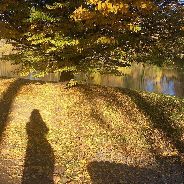 Joli souvenir du week-end aux couleurs de l'automne 🐱🍃🍁 #paris #marne #iledefrance #ilovemyjob #fleuriste #florist #flowers #fleurs #autumn #automne #tree #wonderful #beautiful #sunday #sunnyday #water #shadow #picsoftheday #nature