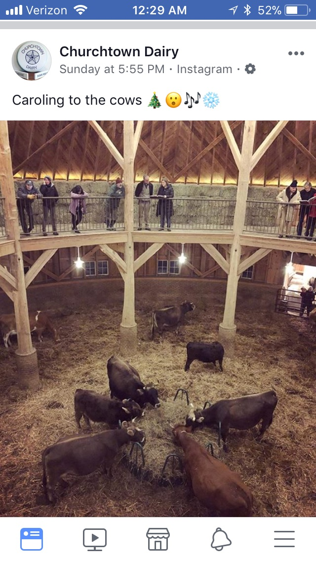 At Christmas, people gather at the Dairy Dome to sing carols to the cows.