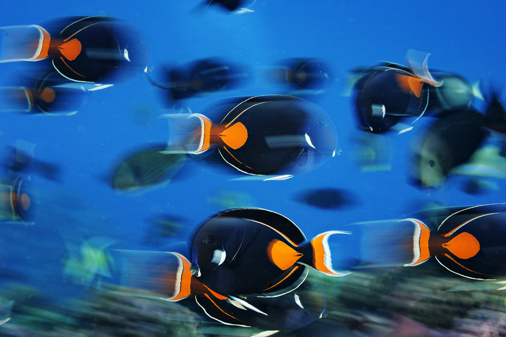 The Painted Reef - Achilles Tang, Vostok Island, 2009