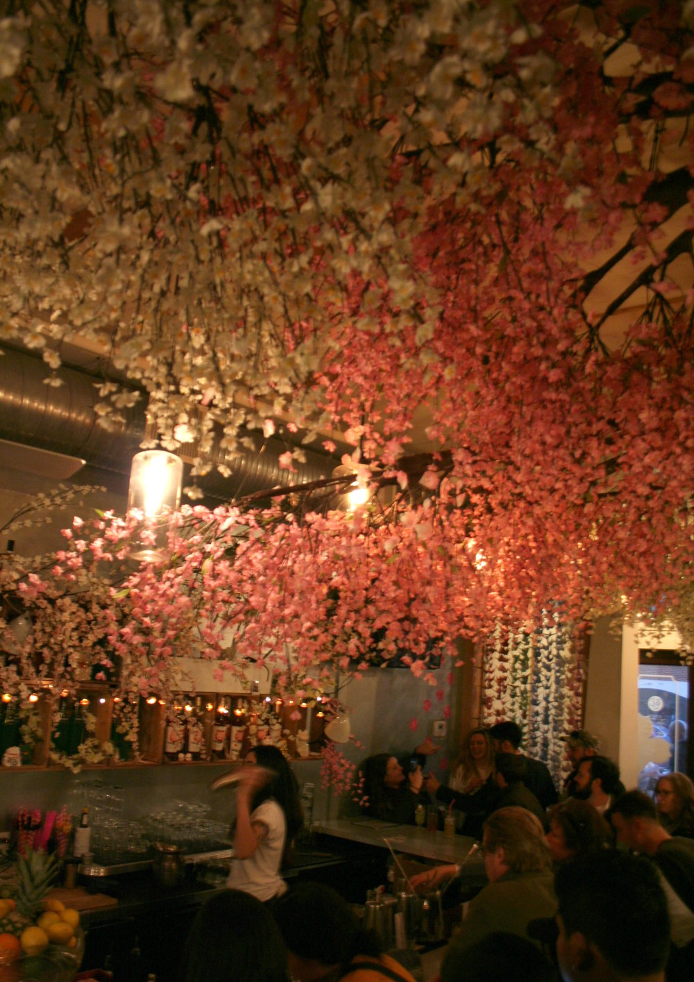 Cherry Blossom Pub, Washington, D.C.