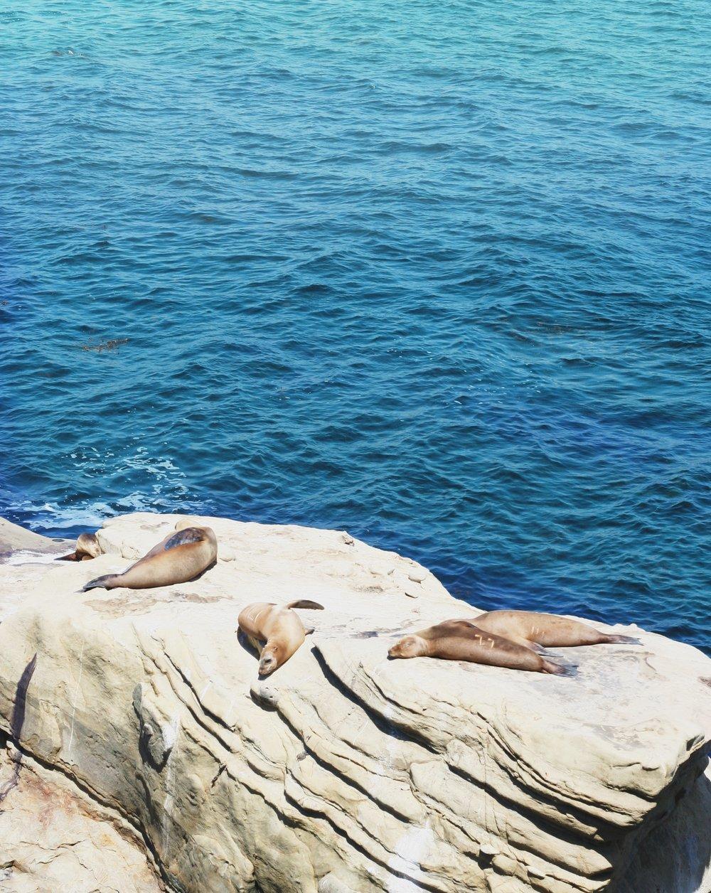 So many Sea Lions at La Jolla Cove.