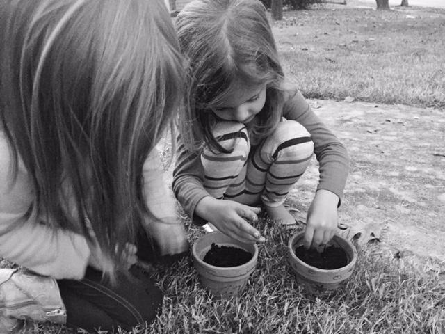 Abernathys planting.jpg
