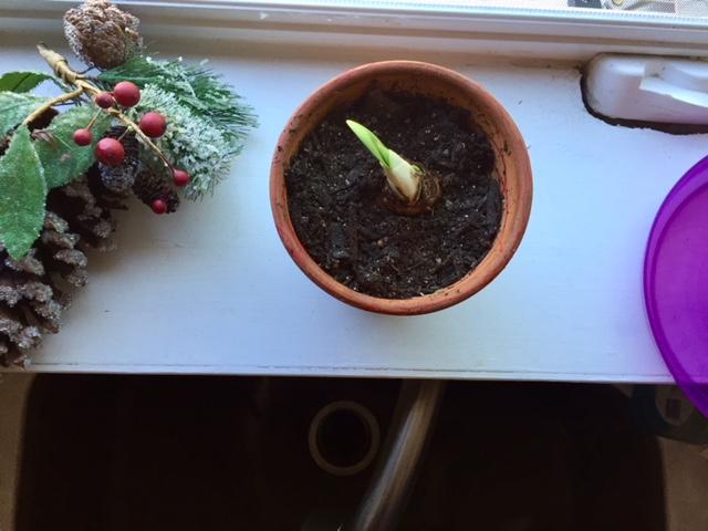 plant shoot.jpg