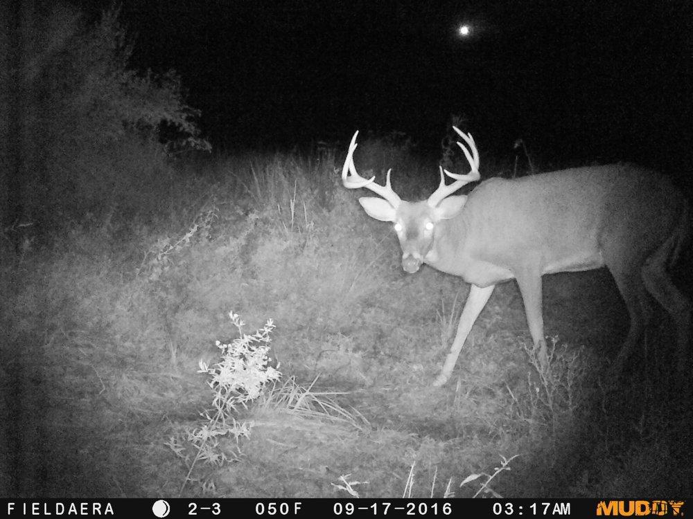 opening morning buck
