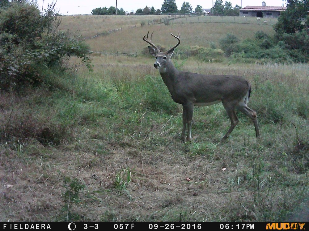day light buck