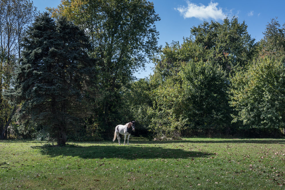 Horse, Ellicott City, Maryland, 2015
