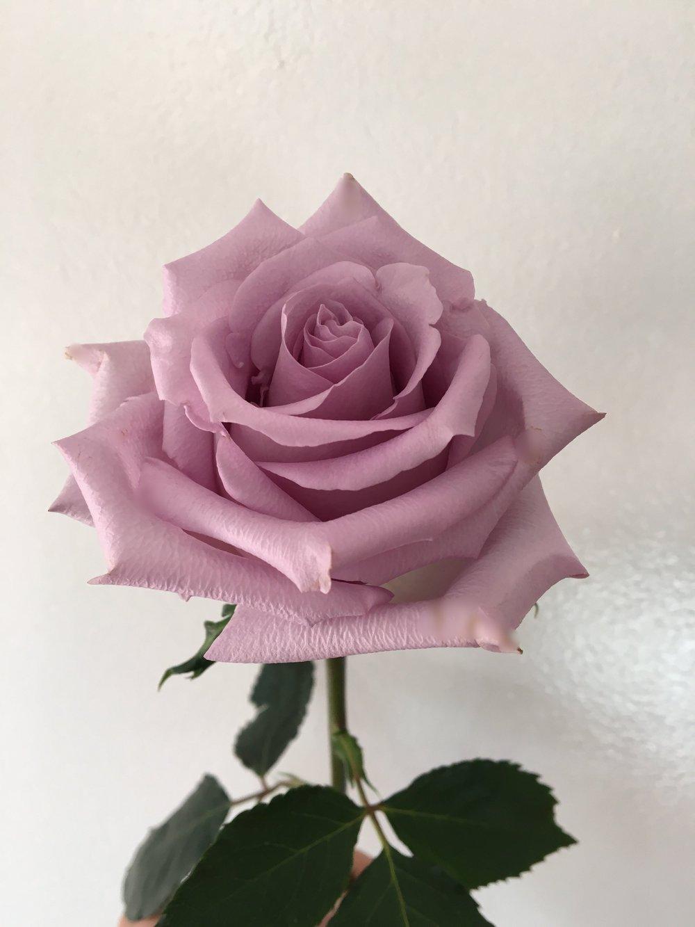 rosas_del_pinar