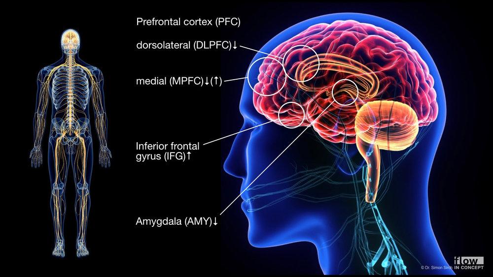 Im flow-Zustand zeigen sich interessante Veränderungen im Gehirn.