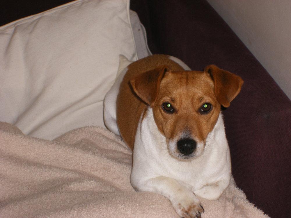 Bobo: Our 4 legged baby (April 2010)