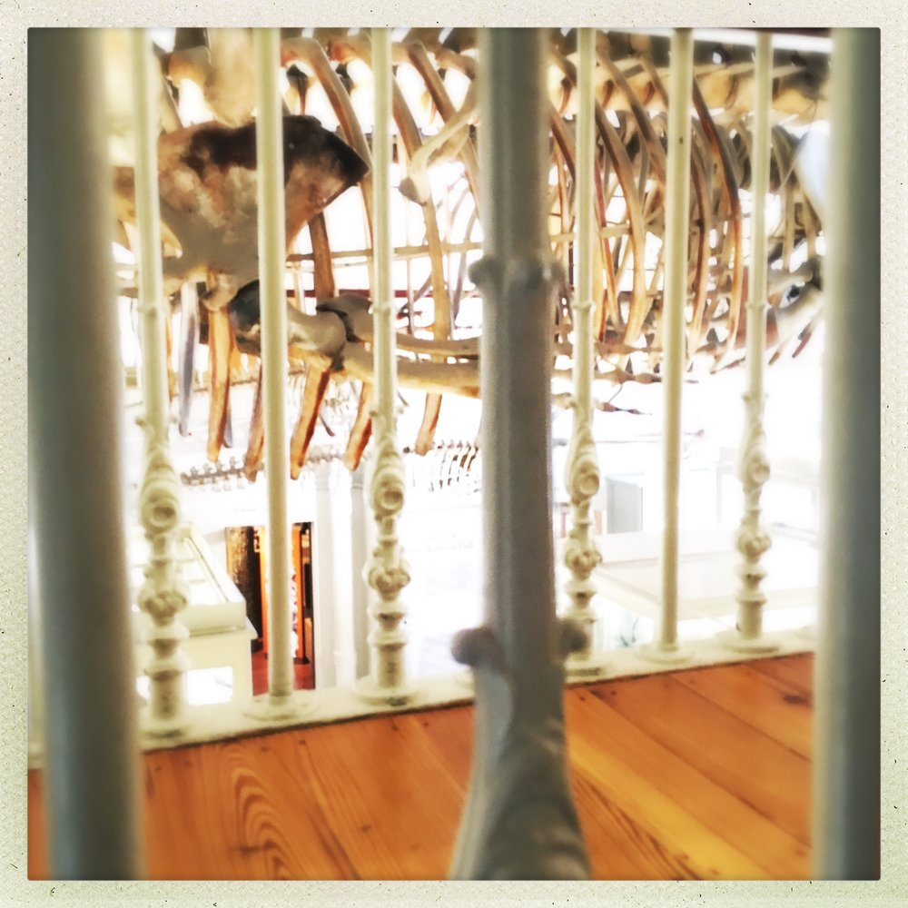 looking at whale bones through mezzanine bones
