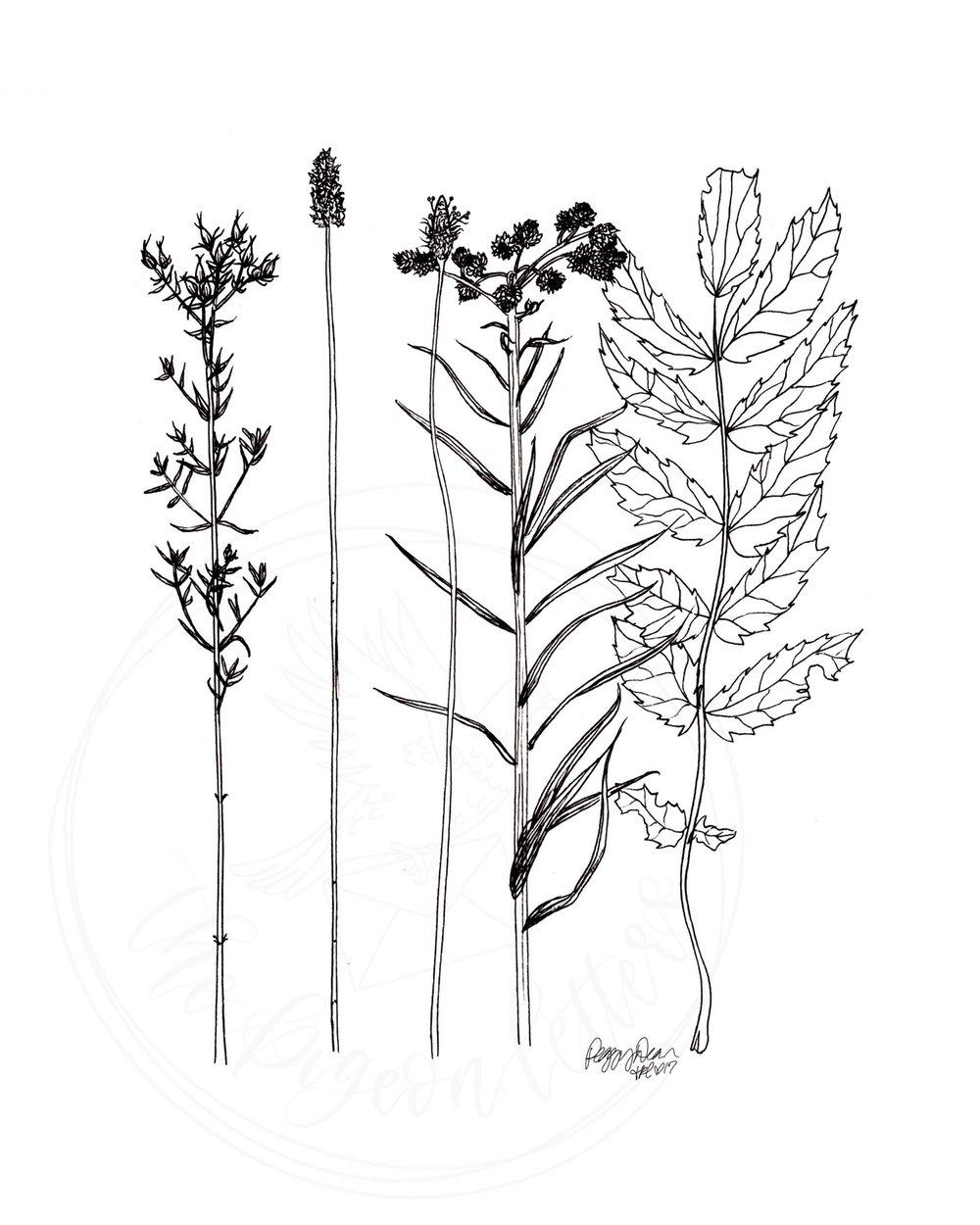 BotanicalsTimothyLake.jpg