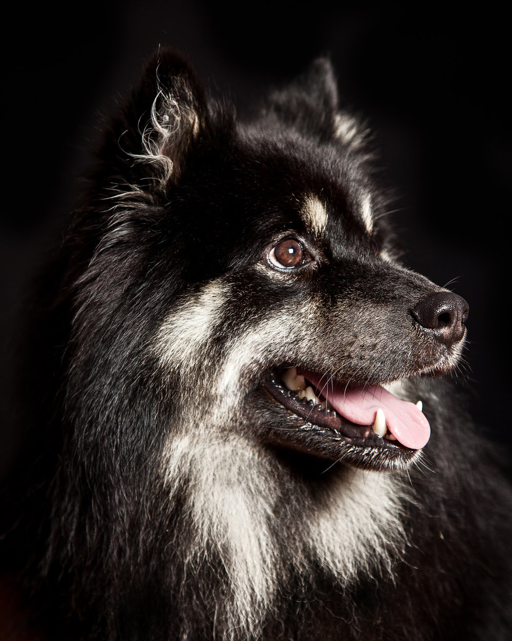 Pet_Animal_Portrait_Photographer_Newbury_Berkshire_013.jpg