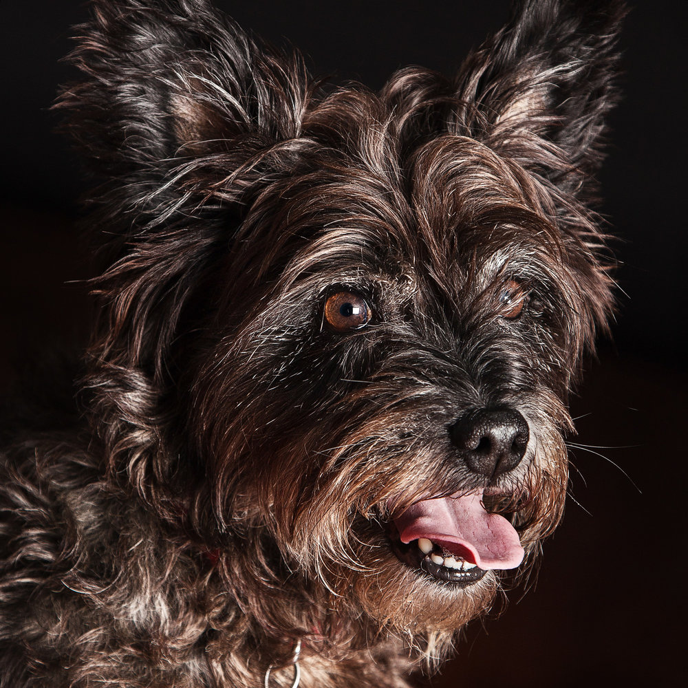 Pet_Animal_Portrait_Photographer_Newbury_Berkshire_038.jpg