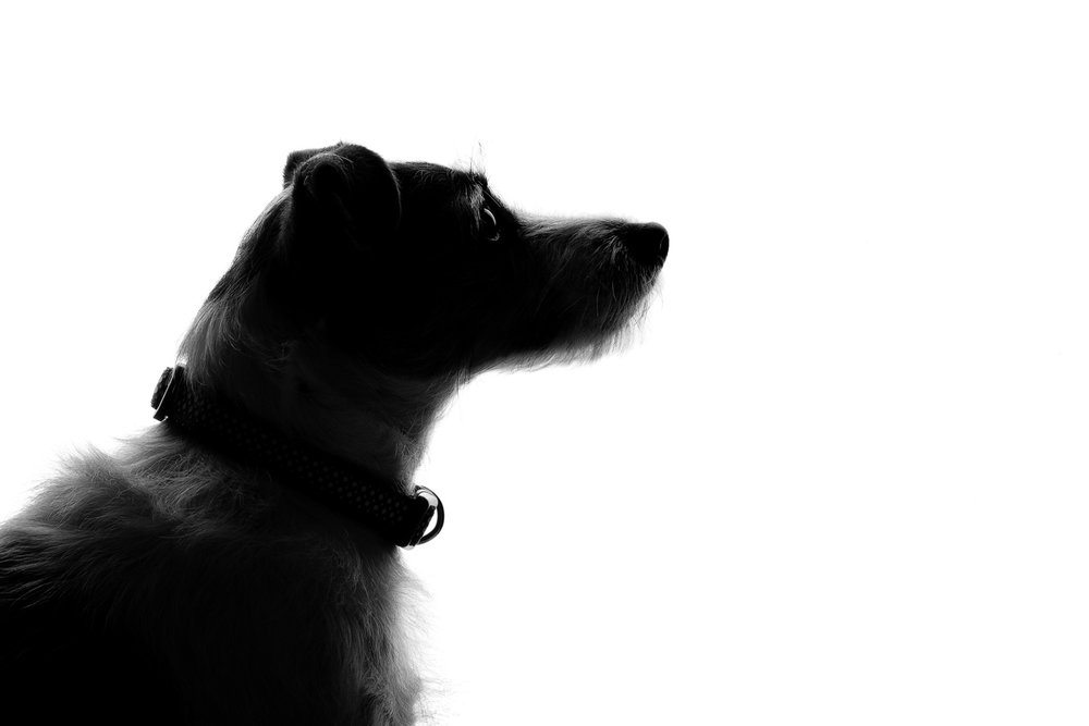 Pet_Animal_Portrait_Photographer_Newbury_Berkshire_041.jpg