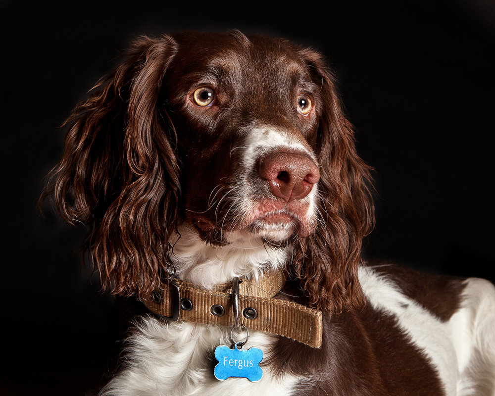 Pet_Animal_Portrait_Photographer_Newbury_Berkshire_048.jpg