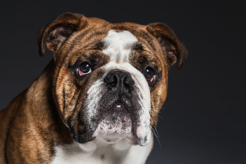 Pet_Portrait_Photographer_Newbury_Berkshire_001.jpg