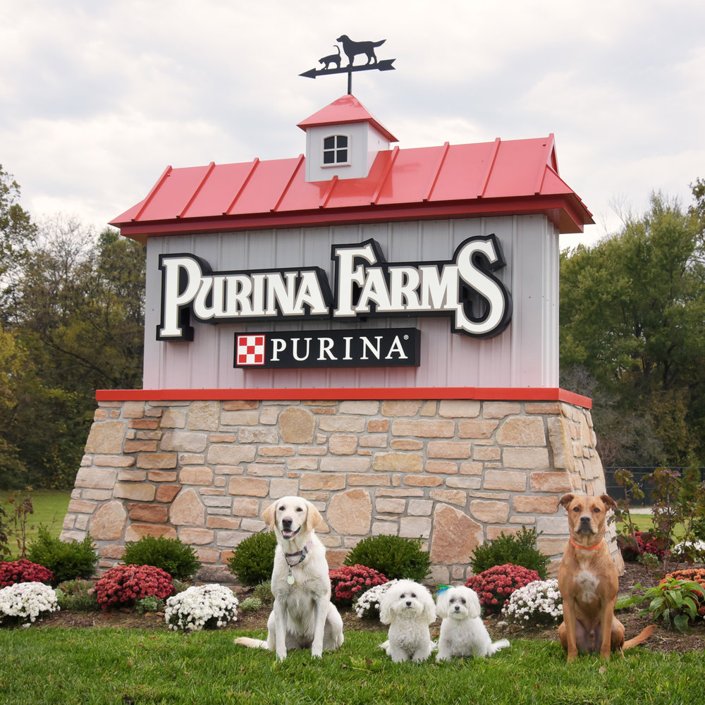 We survived 22 1/2 hours in the car, crossed five states, experienced temps from the 90s to the 40s, but the most important part…we made it to PurinaFarms, safe and sound! Now we're off to rest. We all have a big day of jumping and cheering ahead of us tomorrow!