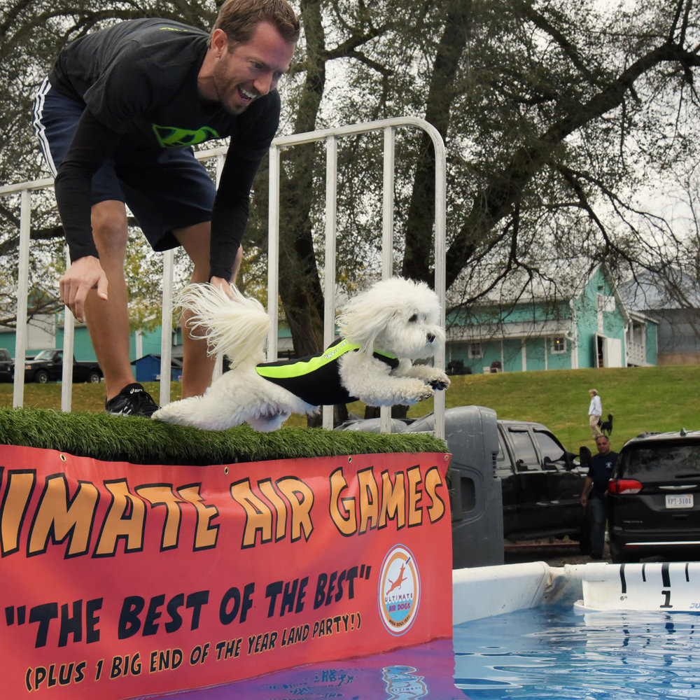 Bruiser's very first (practice) jump into the pool was beautiful…nice and straight, full of power!
