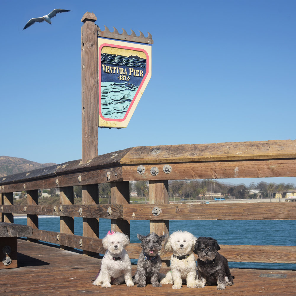 Another day spent adventuring around Ventura! We walked all the way to the end of the pier, where it was crazy windy and there were lots of birds that we so badly wanted to chase!