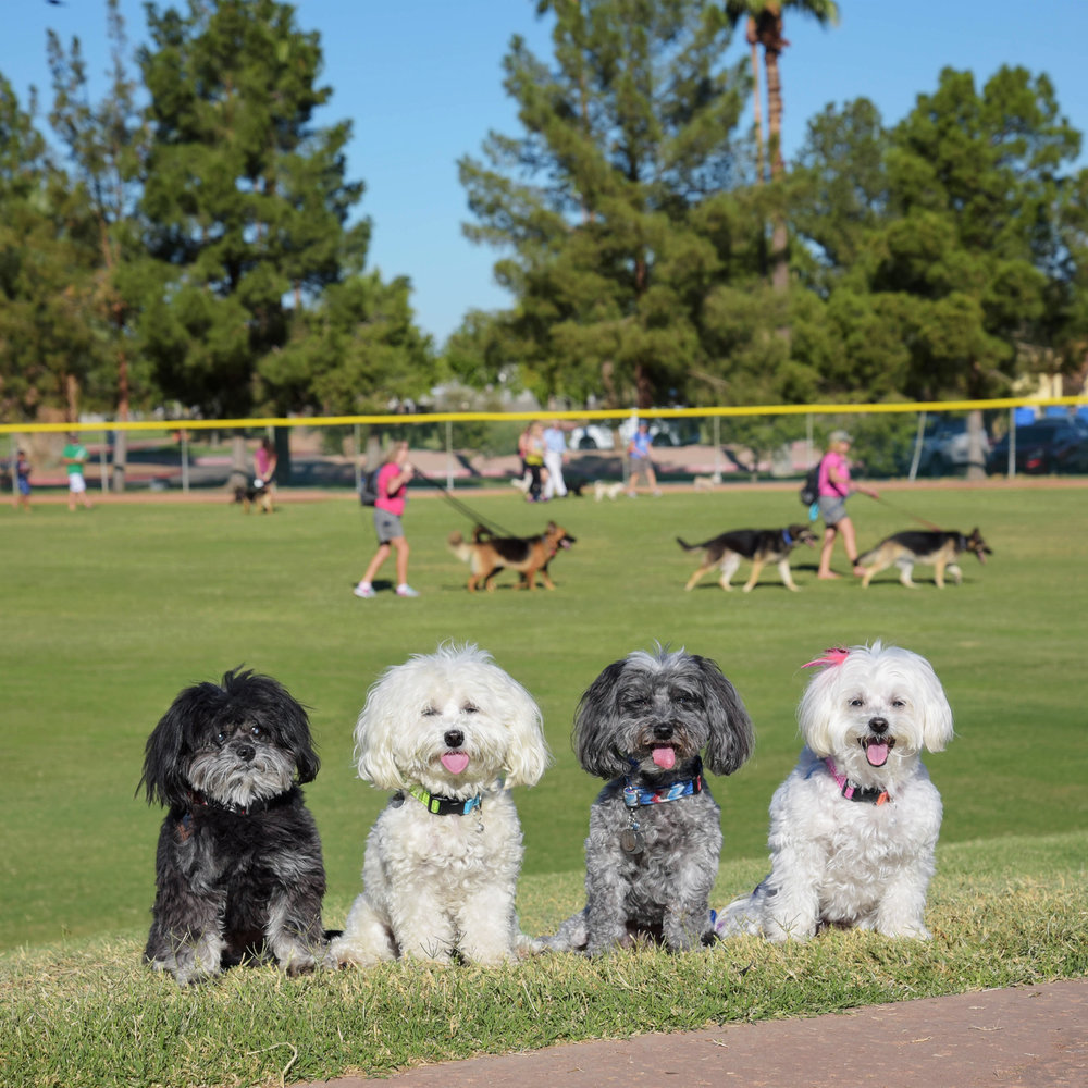 We made it to Freestone Park, the site of the very first Phoenix Strut Your Mutt Walk to benefit Best Friends Animal Society. There are doggies everywhere!! We can't wait to strut our stuff on the catwalk! Wait, this is a dog walk, not a cat walk!!