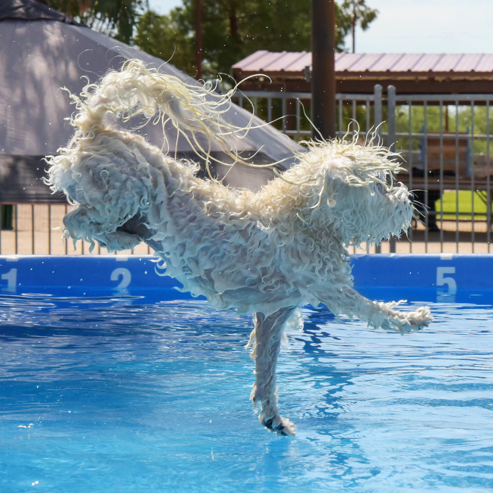 My signature water entry! It's always important to drop one paw to create that perfect ripple for a low splash entry.