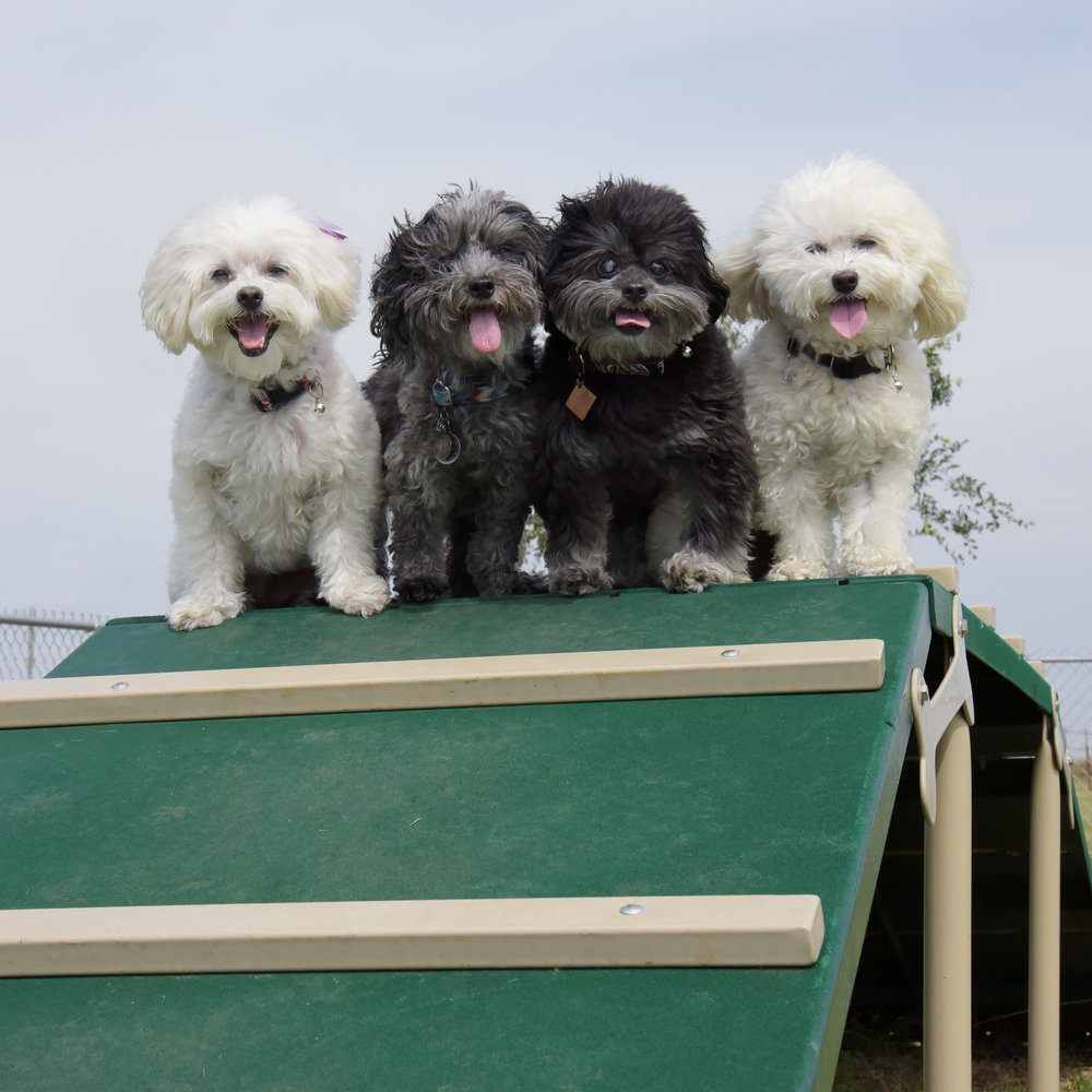Quick…strike a pose, so we can get back to playing! It's like a kiddie park for dogs!