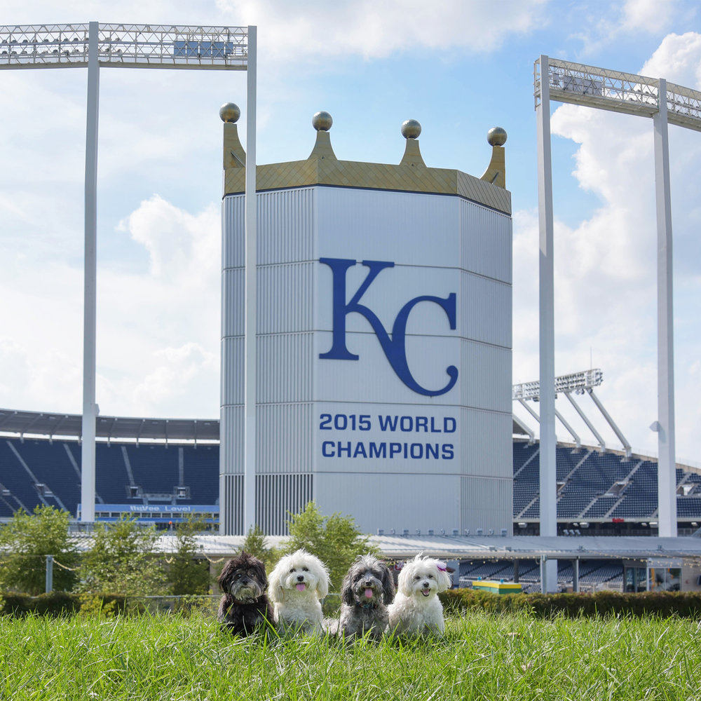 World Champs! We are so proud of the Royals and definitely had to make a stop at the K! The only bummer is that they wouldn't let us on the grass…we just wanted to run the bases, we swear!