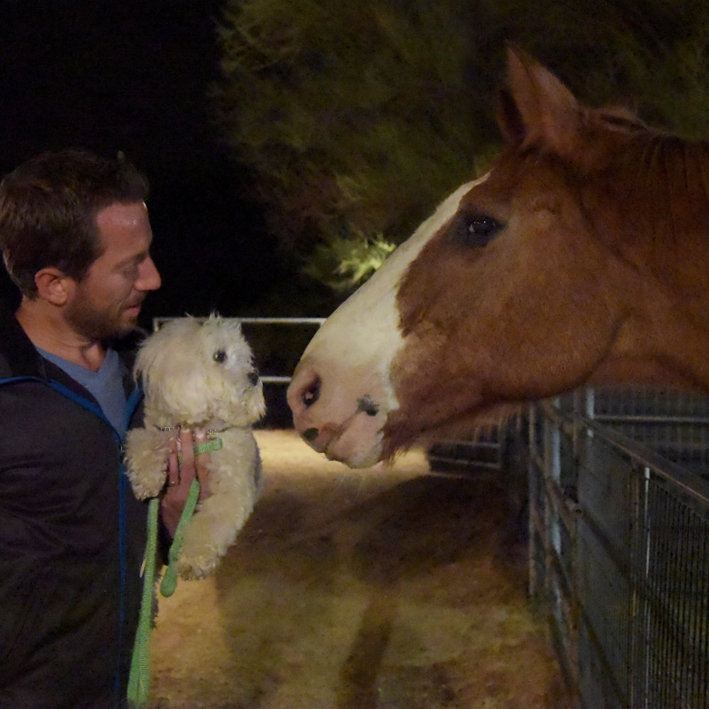 I also met a gigantic horse last night at class! He wanted to give me kisses…I wasn't so sure!
