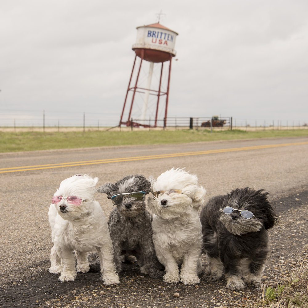 Mom's weather curse is currently following us home! 40-50 mile an hour winds are pushing against us as we travel across the state of Texas. The temperatures are in the very low 40s and it continues to rain off and on. When the water tower is about to fall over, you know the wind is out of control!